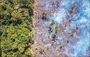 جنگلهای بارانی
