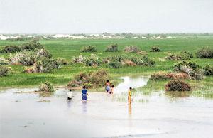 آبگیری تالاب هامون